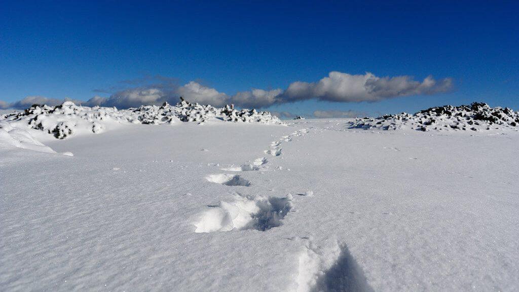 Sul pianoro del Monte Roen