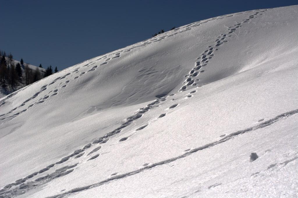 Orme di ciaspole nella neve