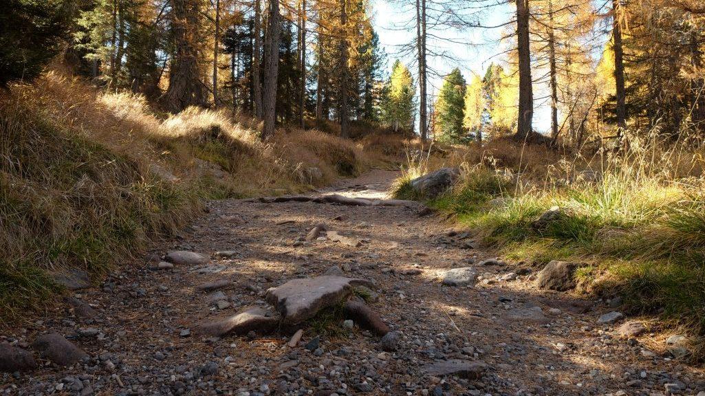 Sentiero verso i Laghi di Colbricon (Ph. Mirko Ropelato)